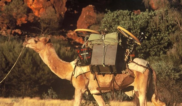 Tilmann Waldthaler - Bike Camel Bike